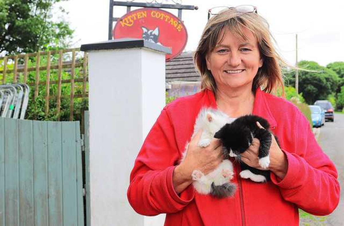 Kitten Cottage Challenges Cat Catastrophe Anglo Celt